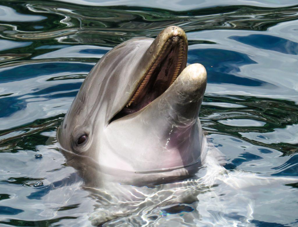 dolphin-sea-marine-mammals-wise-162079